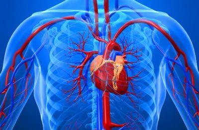 Ateroskleroz aorty serdca 2 27181736